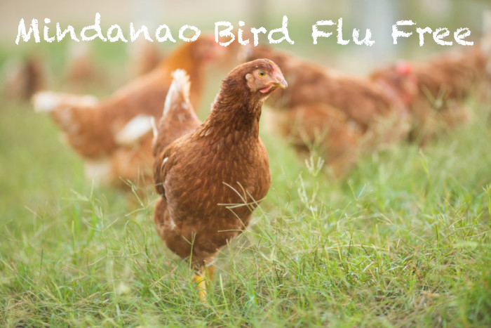 Mindanao Is A Bird Flu Free