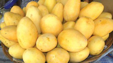 National Mango Congress